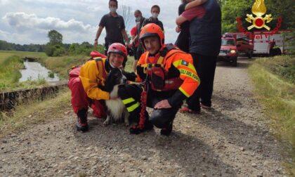 Galliate cagnolino resta incastrato in un canale: salvato dai vigili del fuoco