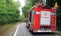 Cade una pianta sulla sua auto: soccorso a Borgo Ticino