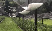 Grandinate, la Regione Piemonte corre ai ripari per salvare l'agricoltura..con le reti