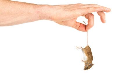 Case popolari infestate dai ratti: per protesta porta topo morto in Comune