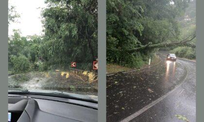 Nuova ondata di maltempo: alberi e tralicci caduti, strade interrotte