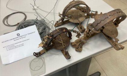 Trovato il bracconiere che posizionava tagliole a Briona: rischia multa salatissima