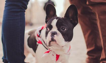 Giornata mondiale del cane: 8 consigli utili per portarli al ristorante