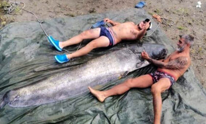 """Sul fiume Adda si pescano """"mostri"""": pesci siluro lunghi oltre due metri"""