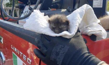 Vigili del fuoco di Arona salvano gattino