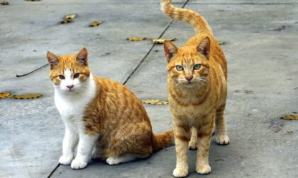 Lavori di riqualificazione in corso al gattile di Verbania